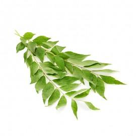 泰國 咖喱葉