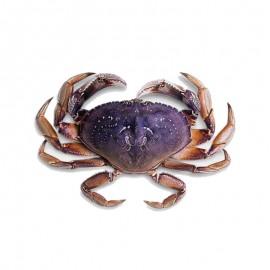 鲜活珍宝蟹