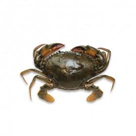 鲜活青膏蟹