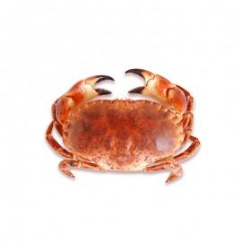 鲜活面包蟹