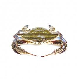 冰鲜梭子蟹