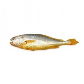 鲜活大黄鱼(现杀)