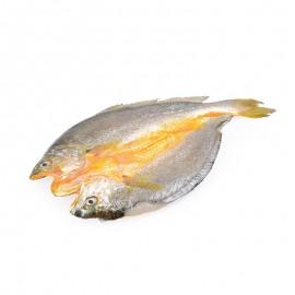 鲜曝大黄鱼