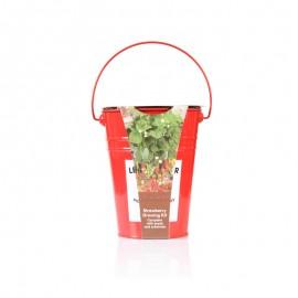 草莓种植套装(丘比特)