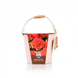 球根海棠种植套装 (瓦松红色)