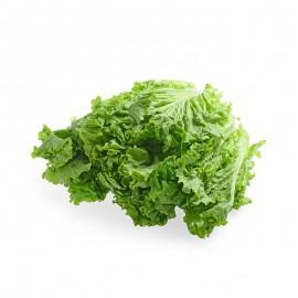 有机罗莎绿生菜