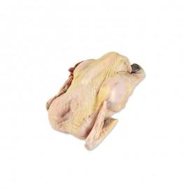 原種五華雞 老公雞