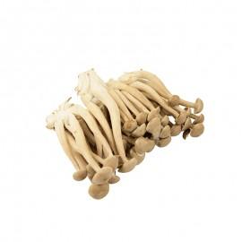 食菌紀鹿茸菇
