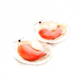 凍半殼蝦夷扇貝