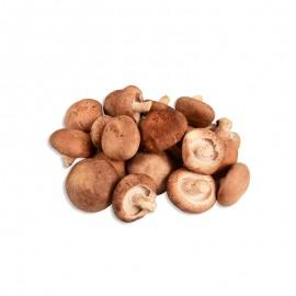 食菌紀 金錢菇