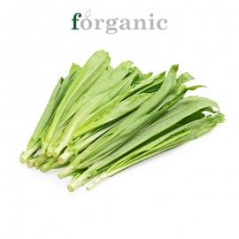 forganic 有機油麥菜