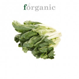 forganic 有机奶白菜