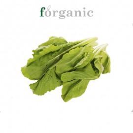 forganic 有機杭白菜