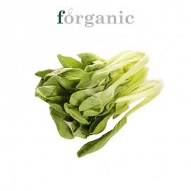 forganic 有机青菜