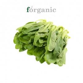 forganic 有机鸡毛菜
