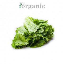 forganic 有机叶生菜