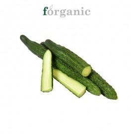 forganic 有機刺黃瓜