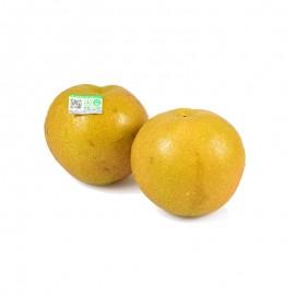 揚州 有機豐水梨