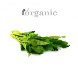 forganic 有機菠菜