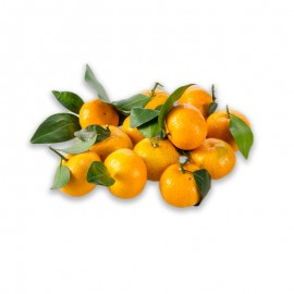 德慶 金秋砂糖橘