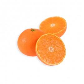 象山 紅美人橘橙