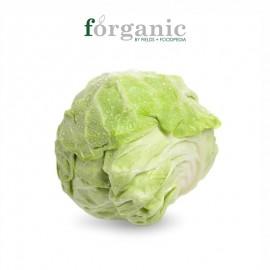 forganic 有机牛心菜