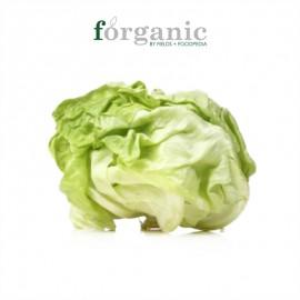 forganic 有機奶油生菜