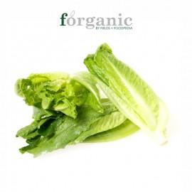 forganic 有机罗马生菜