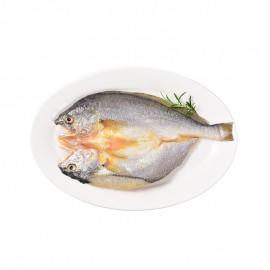 鮮爆大黃魚