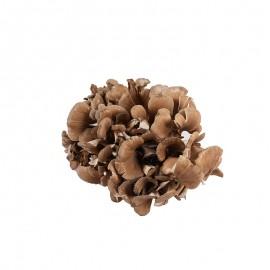 食菌纪 新鲜灰树花